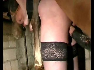 Female in black stockings bent and fucked by huge stallion